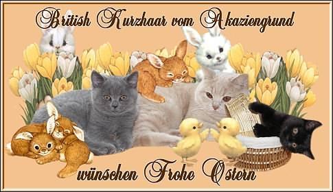 An den Beitrag angehängtes Bild: http://www.vom-akaziengrund.de/gb/ostern2006.jpg